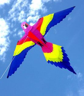 magnificent lorikeet bird design single string kite for children