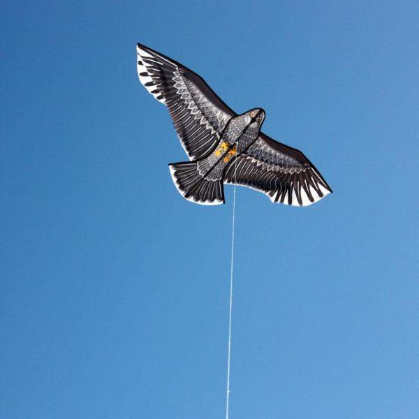 eagle kite for kids