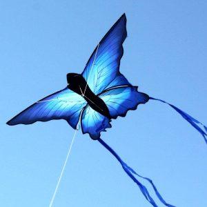 Blue Butterfly kite